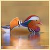 MandarinDuck's avatar