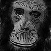 Mandrillustrations's avatar