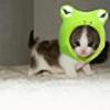ManiacKitten's avatar