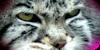 ManulHQ's avatar
