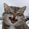 maoavo's avatar