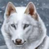 Maranez's avatar