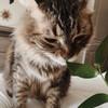 marblecat-adoptablss's avatar