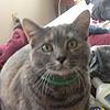 marcelinethevampire6's avatar