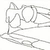 marcoornithodira's avatar