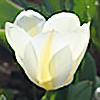 Margarrette's avatar