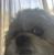 MariahSanchez's avatar