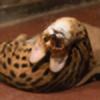 marycat1993's avatar