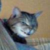 MatheusMiranda's avatar