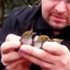 MatthewBrauchli's avatar