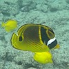 maunakea52's avatar