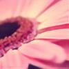 May7893's avatar