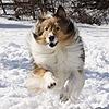 mbfire's avatar
