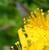 MedicineCat612's avatar
