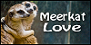 Meerkat-Love