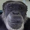 Megasupream's avatar