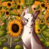 megkxt's avatar