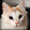 Mei-Silja's avatar