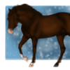 Meine-Tiere's avatar