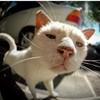 meomatseo8197's avatar