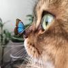 Mereisa's avatar