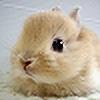 metagross111's avatar