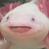 mgaMES5684's avatar