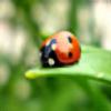 Mia92's avatar