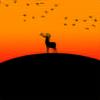MidNightAA's avatar