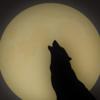 MidnightMovielover's avatar