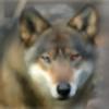 MidnightSilverFurry's avatar