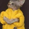 mikeeebear63's avatar