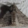 mikkimanyhawks's avatar
