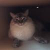 mimilu13's avatar