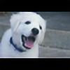 mimiunicorn31's avatar