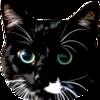 mintdawn's avatar
