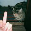 Mintgraff's avatar