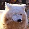 MintuDamax's avatar