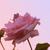 MissComrade's avatar