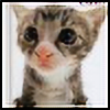 misseduquiteterribly's avatar