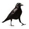 MissIp's avatar