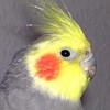 MisterKrababbel's avatar