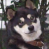 Mitamose's avatar