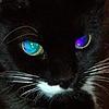 mkxc3's avatar