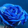 MLPLary6's avatar