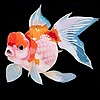 MokkoFisher's avatar