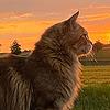 MomokoShinzoArts's avatar