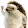 momotraping's avatar