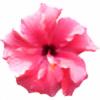 Moni2201's avatar