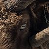 MonikaTherese's avatar